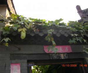 丝瓜叶已开始变黄,伸出院门的丝瓜也进入它的暮年,.
