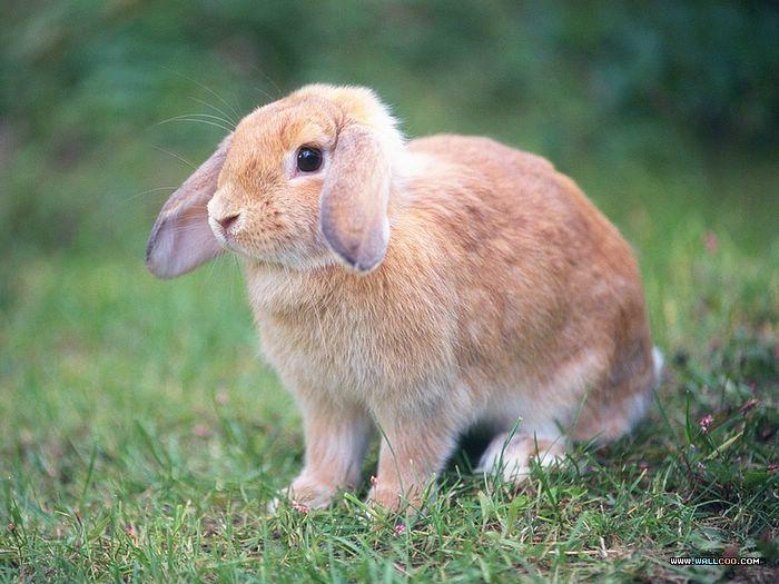 疯狂动物城白小兔子摇尾巴