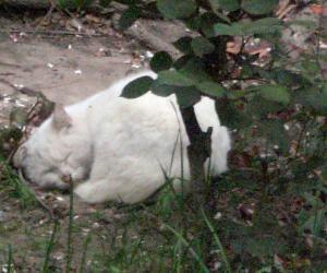 白雪公主的淑女睡姿