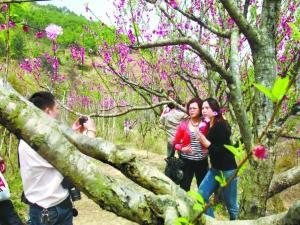 7岩花岭树绽新蕾