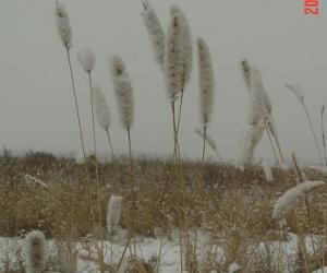 雪让最平凡的事物变得富有诗意画意