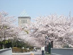 钟楼和樱花 小
