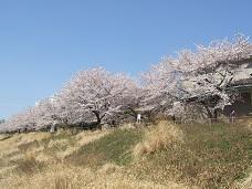 桜花路外景 小