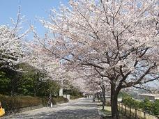 桜花路左側是大学 小