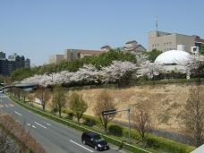 桜路と教学楼 小