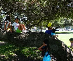 调皮的孩子们攀爬古树。