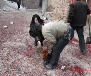 柏香承/5该男子开始杀鸡,女信众手拿柏香承鸡血,然后敬献.